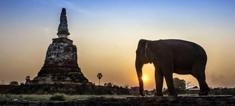 Thailand Temples Elephant Yacht Agent Seal Superyachts Phuket