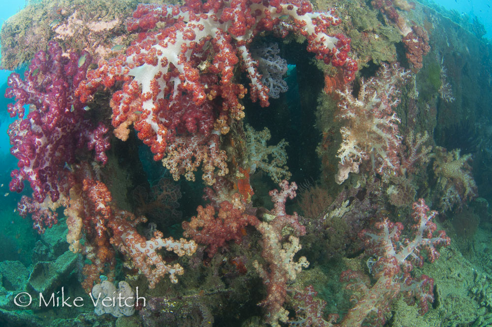 Wreck Diving by Mike Veitch, The Lighthouse Consultancy
