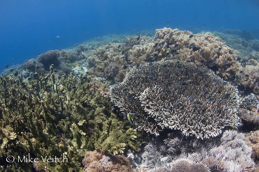 Hard coral reef in the shallows, Mike Veitch
