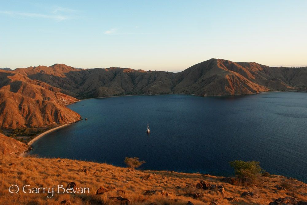 Komodo, photo by Garry Bevan/Lighthouse Consultancy