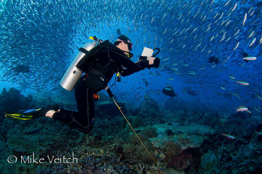 Diving Komodo, image by Mike Veitch, Lighthouse Consultancy