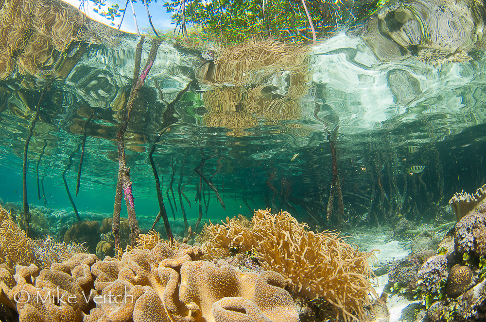 Mangroves, photo by Mike Veitch