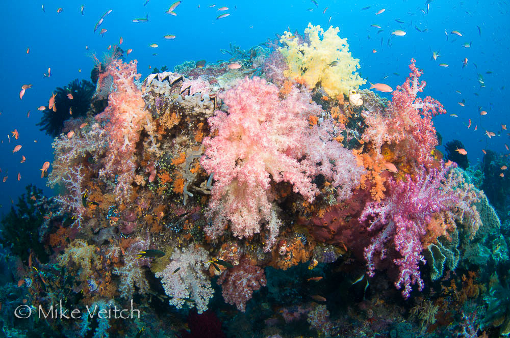 Soft Coral Reef, photo by Mike Veitch
