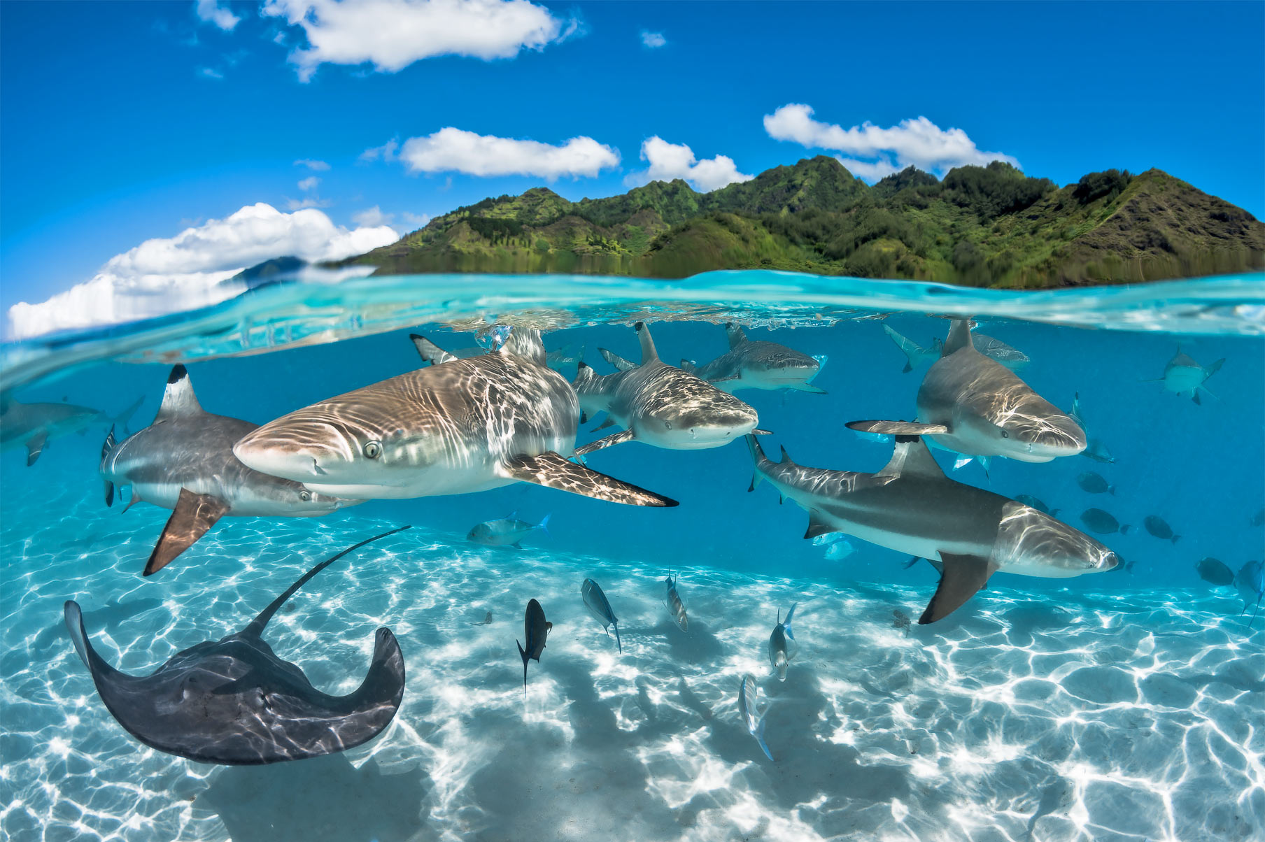 Sharks in Tahiti can be experience via superyacht.