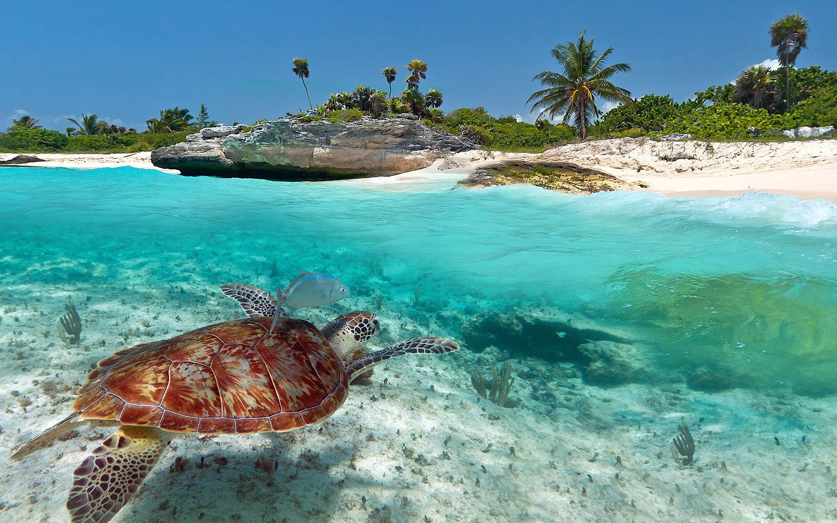Vanuatu: Top 10 Attractions And Awesome Activities Of Espiritu Santo