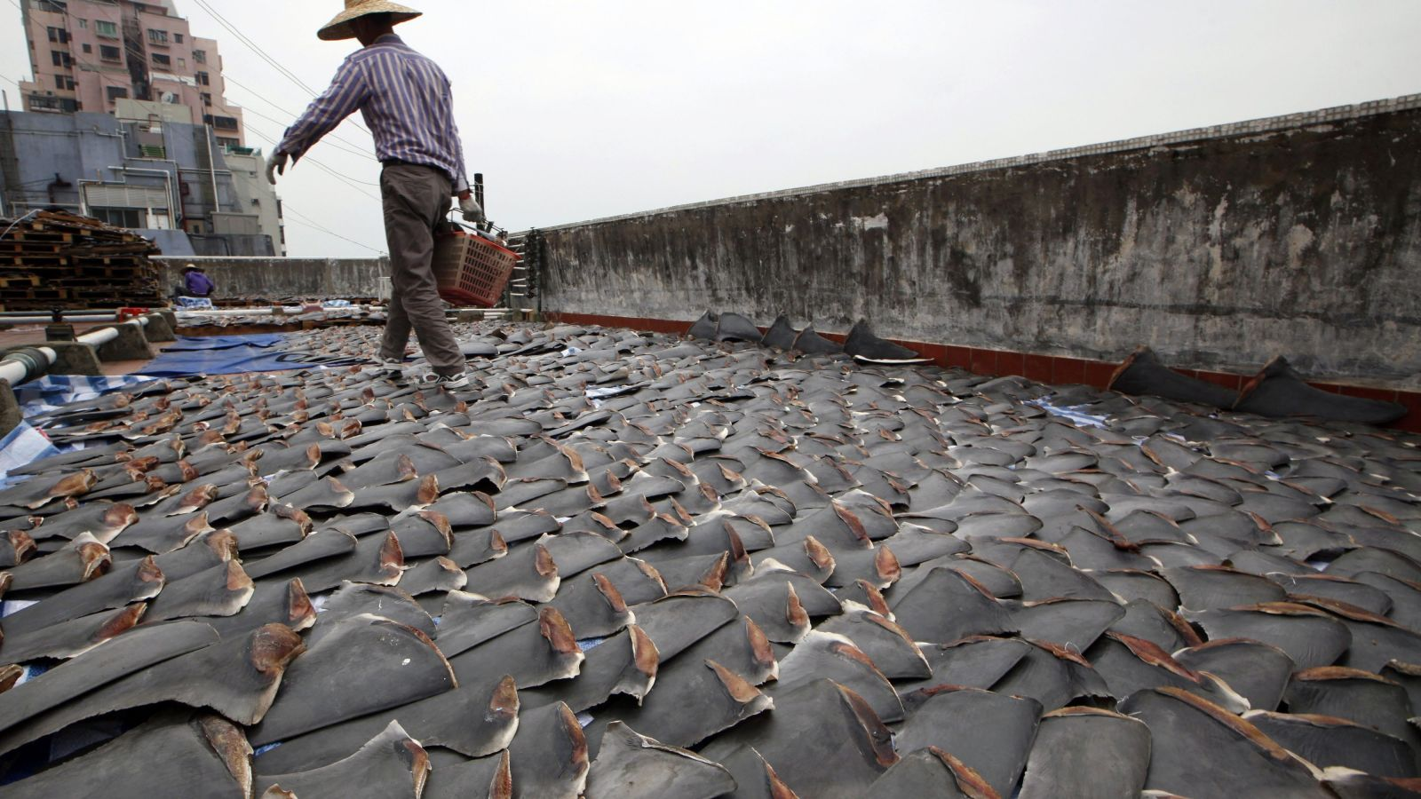 Shark Fin Soup poachers