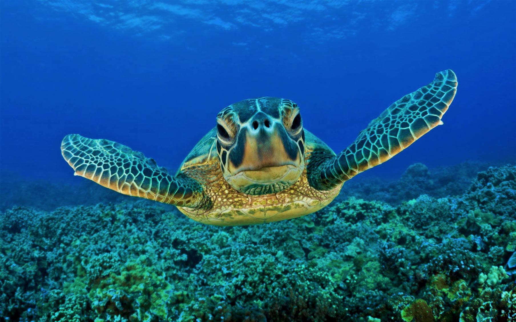 Sabah aims for 2.5 million hectares of protected waters, Turtle.