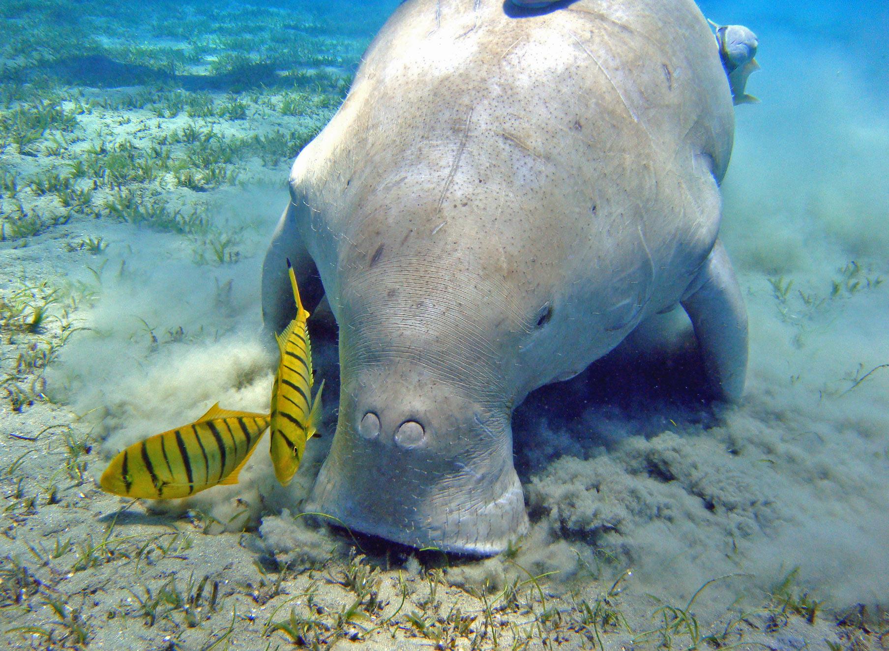 Dugong via Seal Superyachts Thailand.