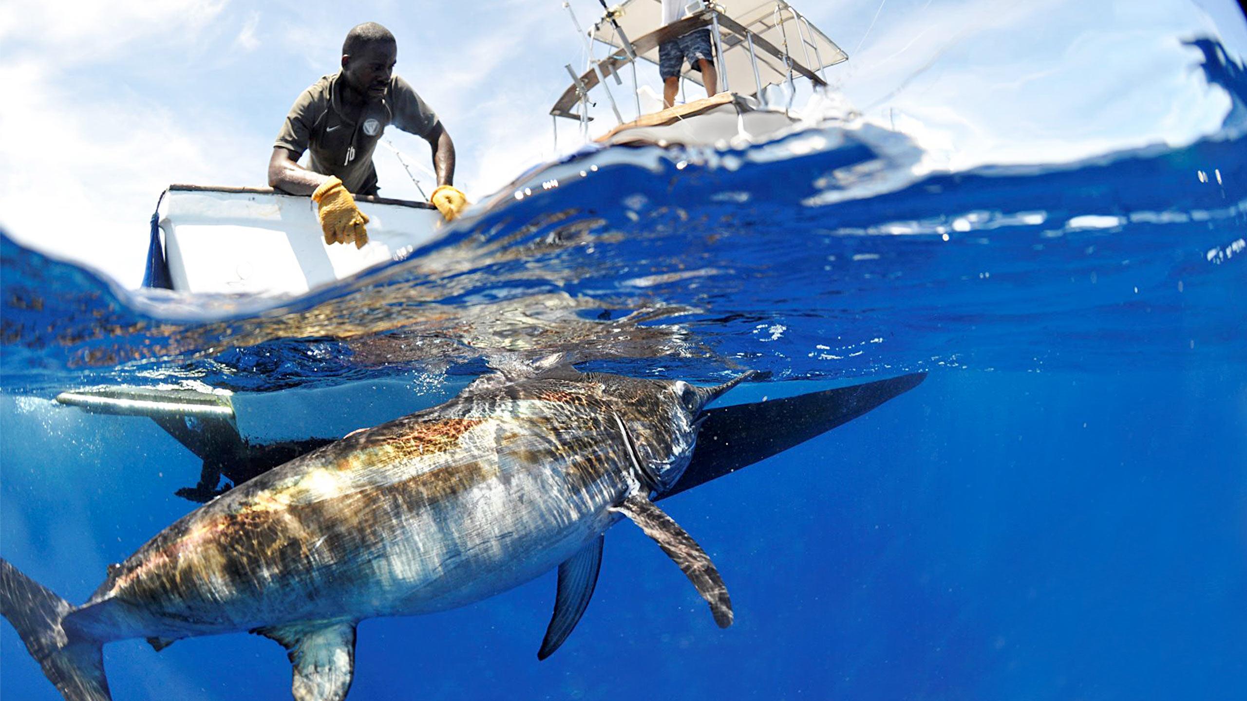 DORSAL EXCURSION BACKPACK FISHING MARLIN