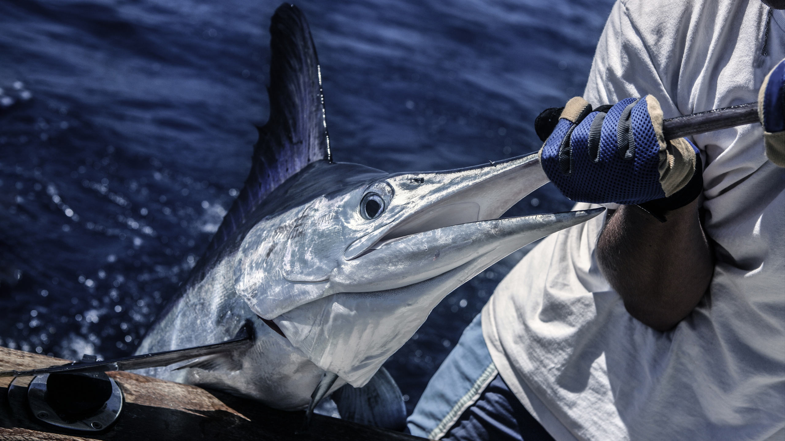 The Ultimate Guide To Big Game Fishing In Mauritius | Seal Superyachts